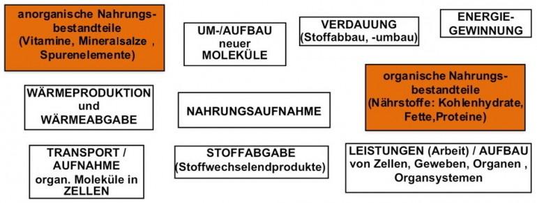 AB1-1 Stoffwechsel_Teil2.jpg