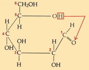 Abb. AB 1_2.1-2 Ringschluss beim Glucosemolekül