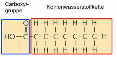 Abb. AB 1_2.2-2 Fettsäure