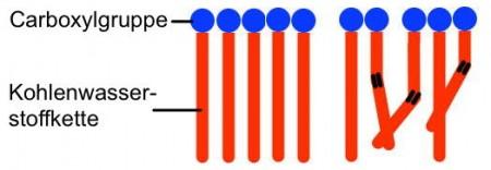 Abb. AB 1_2.2-4 gesättigte und ungesättigte Fettsäuren im Raum
