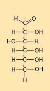 neu_EA_4.1-1 Glucose_Kette