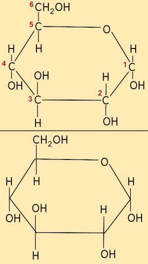 neu_EA_4.1-2-3 Glucose_Ring