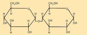 neu_EA_4.2-3 Maltose