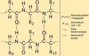 neu_EA_4.2-7 H_Bruecke_protein