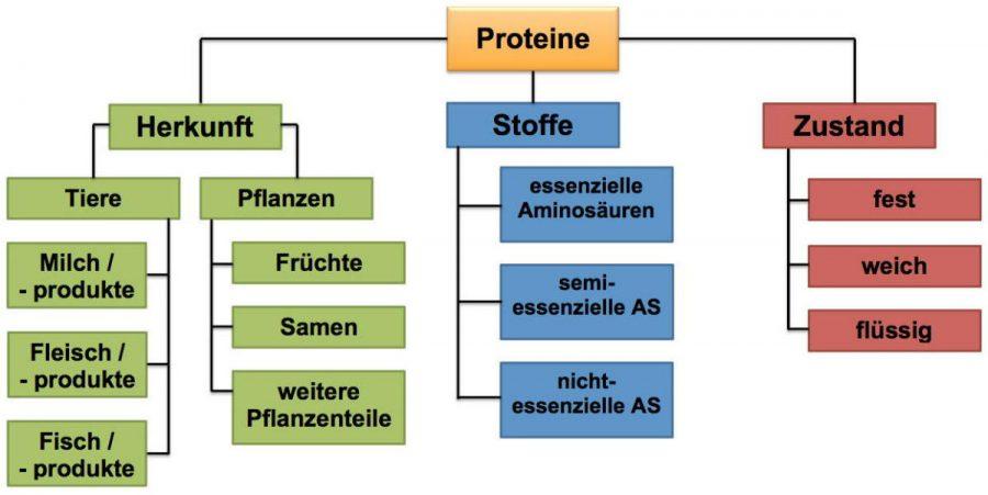 """Abb. L_2.3-3 Mögliche Einteilung der Eiweiße unter dem Gesichtspunkt """"Nahrung"""""""