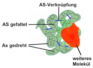 Proteinbiosynthese