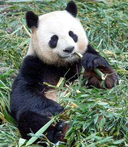 Toleranzkurve Panda